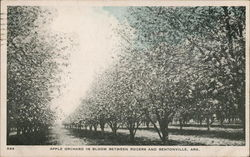 Apple Orchard in Bloom Between Rogers and Bentonville, Ark.