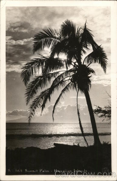 Sunset and Palm Tree Scenic Hawaii Interesting Cancels