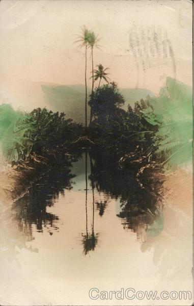 Tall Palm Trees Reflected in Water, Tinted Honolulu Hawaii