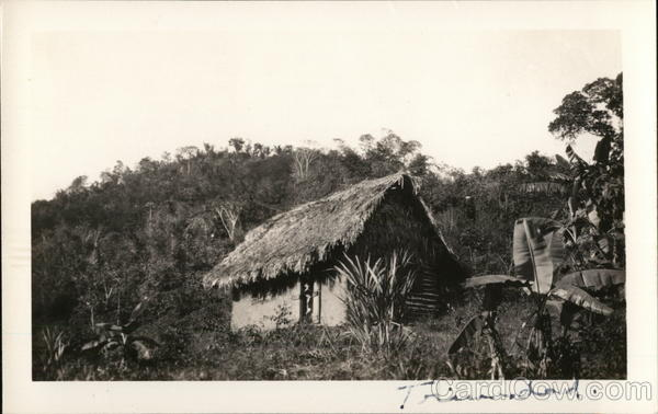 Small Structure with Thatch Roof in Jungle Setting Trinidad