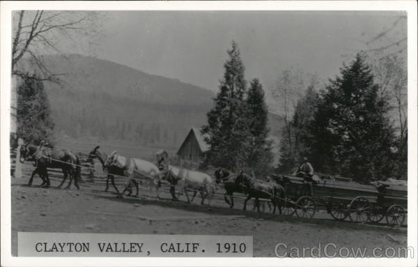 Lumber Wagons Pulled By Horses 1910 Clayton California