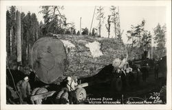 Logging Scene: Giant Log Being Transported in Western Washington