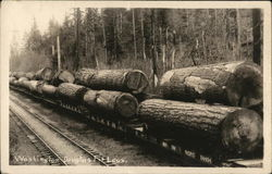 Washington Douglas Fir Logs