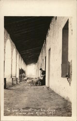 Mission San Miguel - Lone Resident and his Sheep
