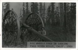 Big Wheels Used in Logging 1900