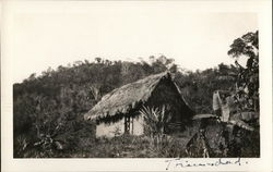 Small Structure with Thatch Roof in Jungle Setting