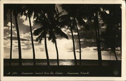 Hawaiian Sunset Thru the Palms - Hawaiian Islands