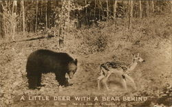 A Little Deer with a Bear Behind