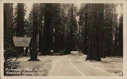 Richardson Grove on the Redwood Highway