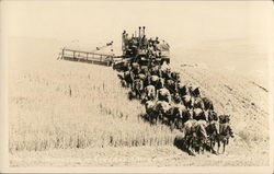 Harvesting Grain with Horse-Pulled Equipment