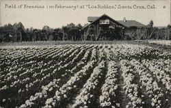 Los Robles - Field of Freesias