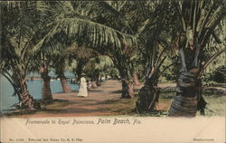 Promenade to Royal Poinciana
