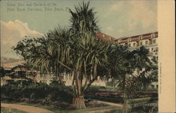 Hotel Royal Poinciana - Screw Pine and Gardens Postcard