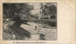 The Willows, Buckley's Creek