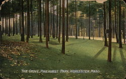 The Grove, Pinehurst Park