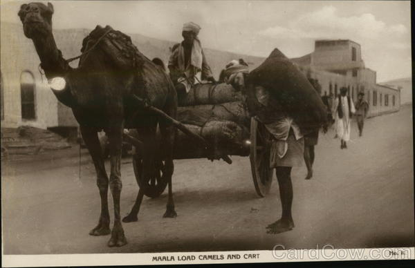 Marla Load Camels and Cart Egypt Africa