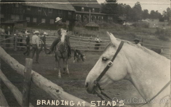 Branding at Steads Colorado Rodeos