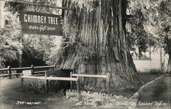 The Chimney Tree at Rocky Glen Court Leggett California