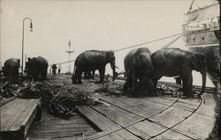 Elephants in Transit