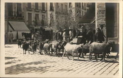 Goat Herd on City Street