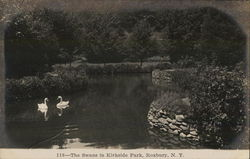 The Swans in Kirkside Park