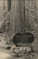 Plaque Honoring The Founder's Tree, World's Tallest Known Tree, 364 ft.