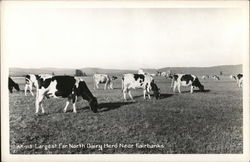 AR-113 Largest Far North Dairy Herd Near Fairbanks Postcard
