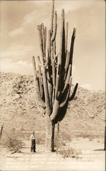 The World's Largest Cactus Postcard
