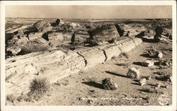Petrified Trees Postcard