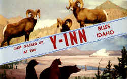 Just Grassed Up At The Y-Inn Postcard