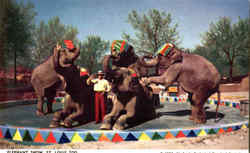 Elephant Show St. Louis Zoo