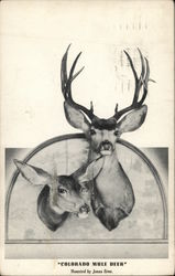 Colorado Mule Deer, Mounted by Jonas Bros.