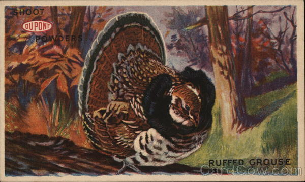 Ruffed Grouse Advertising Hunting