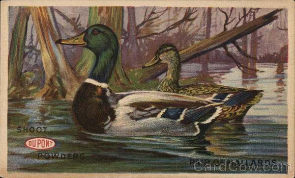 Pair of Mallards Shoot DuPont Powders Advertising Hunting