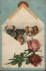 Three Puppies in an Envelope