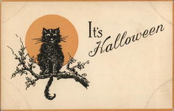 It's Halloween Black Cat