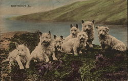 Scenic view of dogs by the water Terriers