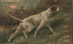 Dupont Powders Manitoba Rap Champion Hunting Dog