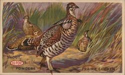 Shoot DuPont Powders Prairie Chicken