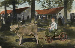 Boy in Studebaker Cart pulled by Calfs