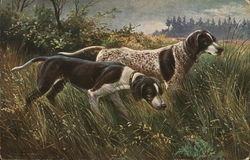 Two Dogs in the Middle of Field