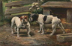 Two Dogs in Yard