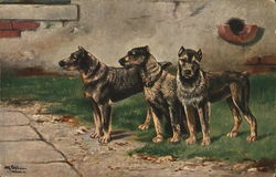 Trio of Dogs