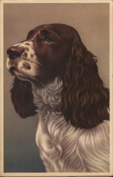 Gorgeous Spaniel Dog