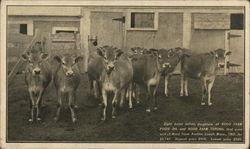 Herd of Cows, Hood Farm