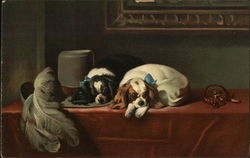 Spaniels of King Charles's Breed