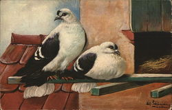 Two White Birds