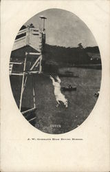 J.W. Gorman's High Diving Horses: Queen