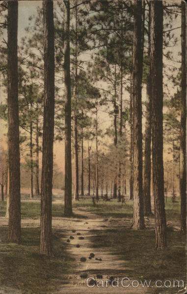 Walk to the Carolina Pinehurst North Carolina