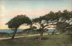 The Cedars at West Chop